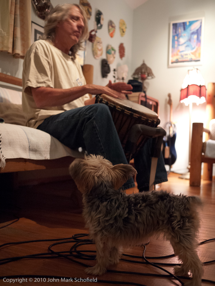 The dog likes the drumming